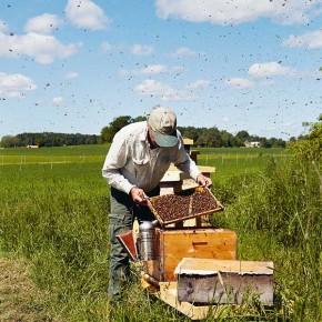 Människan är binas största problem. Om en handbok i naturlig biodling