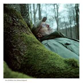 Vidunderliga varelser  - Om Peter Wohllebens bok Trädens hemliga liv