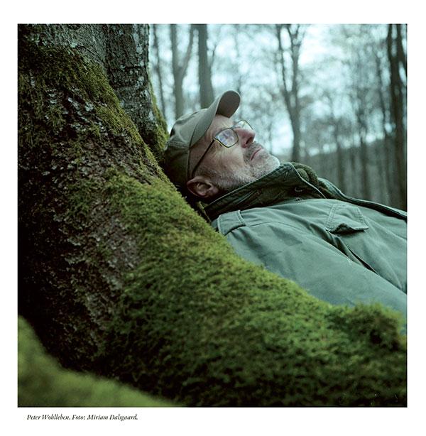 Om Peter Wohllebens bok Trädens hemliga liv