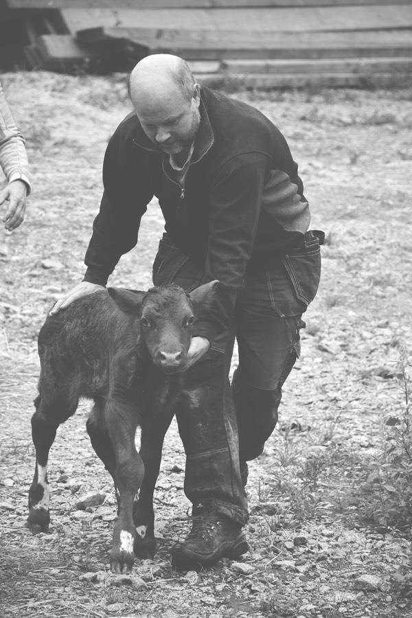 Botulf Bernhard med en kalv Solmarka gård