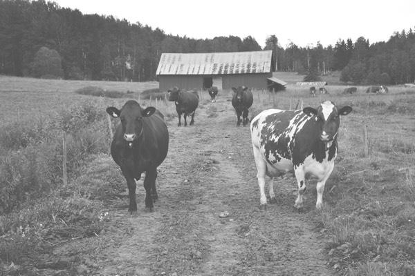 Srb-kor Schönnings lantbruk