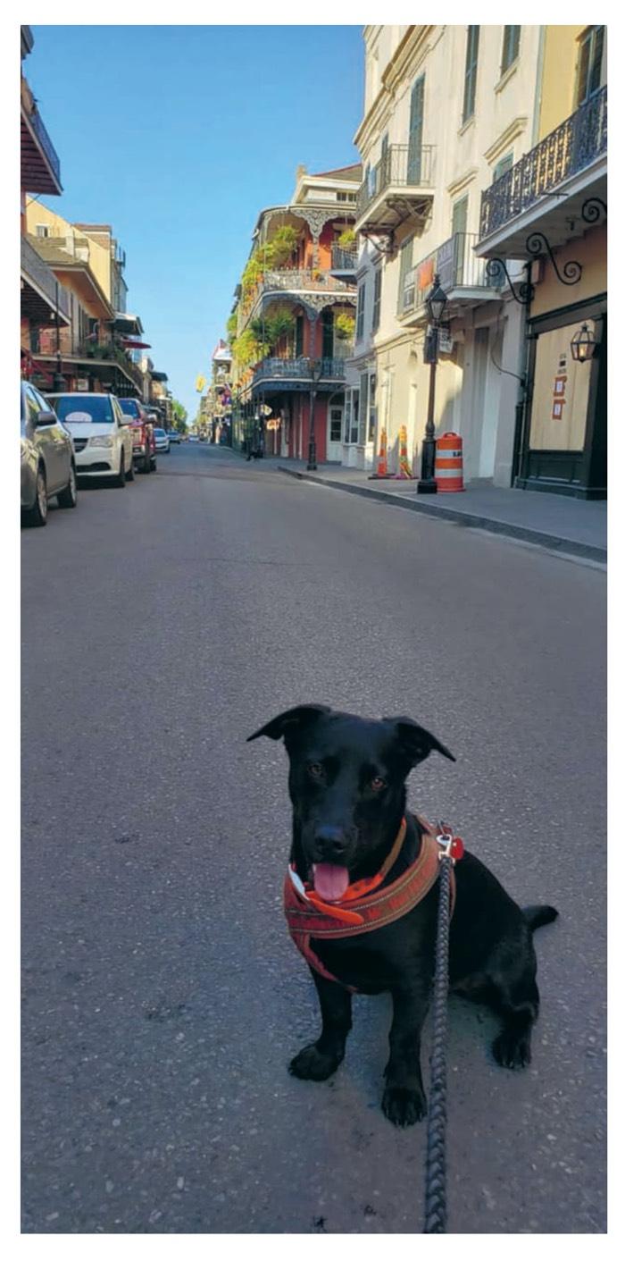 Bild på en hund tillFredrika Spindlers artikeln