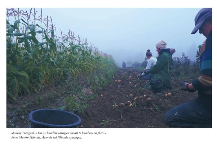 Skilleby Trädgård. »För oss handlar odlingen om att ta hand om en plats.«Foto: Martin Fellkvist.